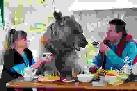 Cặp đôi nuôi dưỡng và sống chung với gấu suốt 23 năm