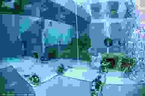 Cận cảnh bể bơi sâu nhất thế giới hơn 40m