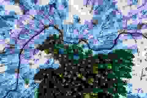 Khoảnh khắc chụp từ trên không đẹp nhất thế giới năm 2016