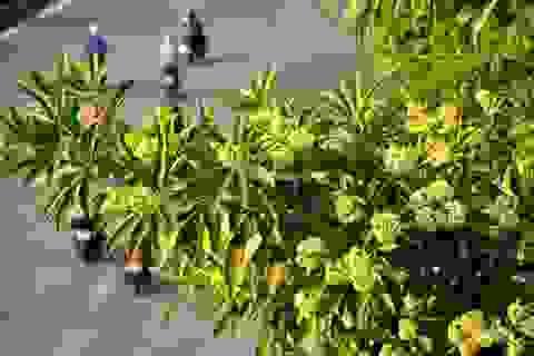 """Những loài hoa """"gọi"""" mùa thu về"""