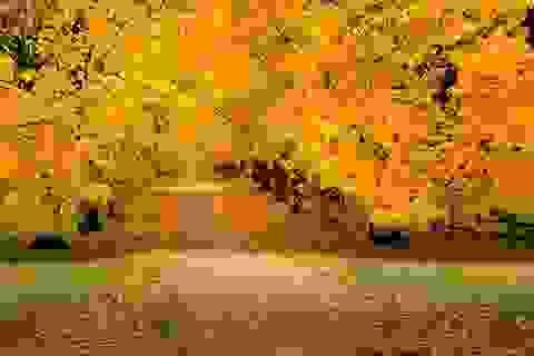 Những con đường lãng mạn nhất thế giới khi trời vào thu