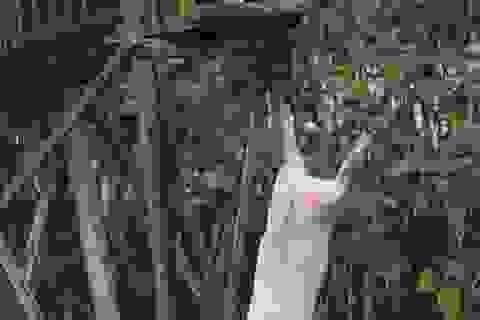 Làm giàu nhờ việc cho lợn... tập bơi và nhảy cầu