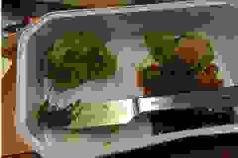 Du khách buồn nôn khi phát hiện gián chết trong suất ăn trên máy bay