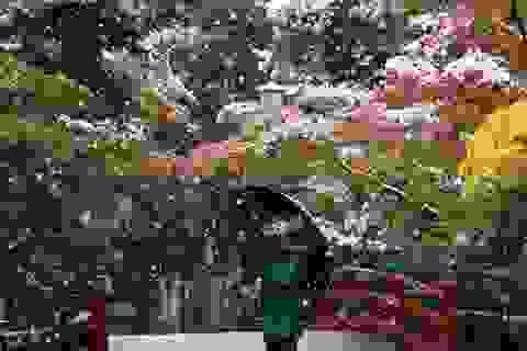 Tuyết rơi đầu mùa biến Tokyo thành xứ thần tiên