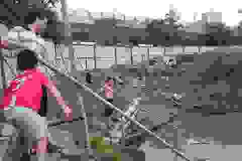 Hà Nội: Sau mưa lớn, người dân kéo ra đường… bắt cá