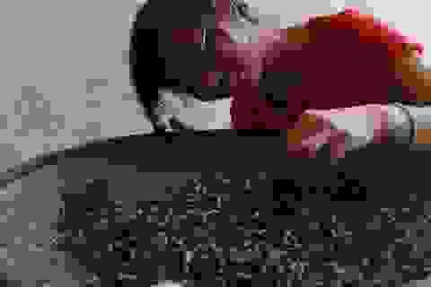 Cô gái bé nhỏ và mơ ước làm trà tử tế