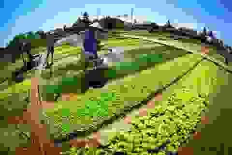 Báo Pháp vinh danh làng rau Trà Quế  của Việt Nam
