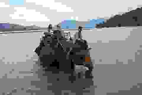 Về Hồ Lắk câu cá, cưỡi voi
