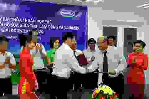 Hợp tác chiến lược để phát triển 10.000 bò sữa tại Lâm Đồng