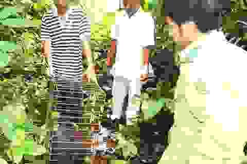 Thả khỉ mặt đỏ, rùa quý về rừng
