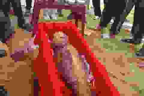 Hàng trăm người an táng cá voi chết trên bờ biển