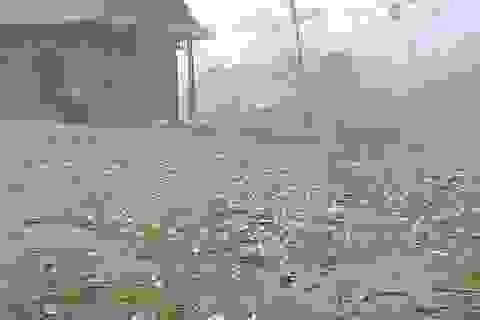 Cận cảnh mưa đá trắng trời, trắng đất tại biên giới Việt - Lào