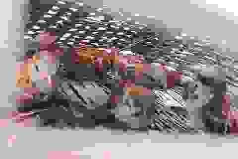 Theo chân thợ săn chim sẻ