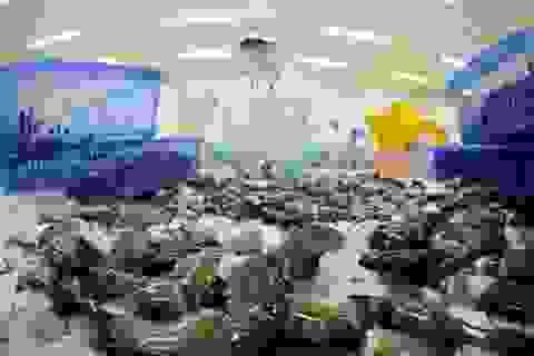 Mỹ giảm mạnh thuế chống bán phá giá với tôm Việt Nam