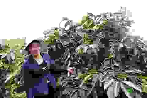 Cà phê Việt nhìn từ những cam kết của Nestlé