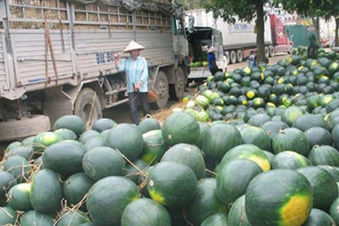 Nghịch lý trong tiêu thụ nông sản: Nội địa mua giá đắt, biên giới tắc đầu ra