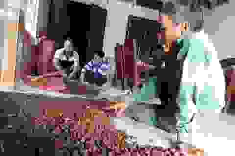 Thương lái Trung Quốc lại săn lùng hạt ươi