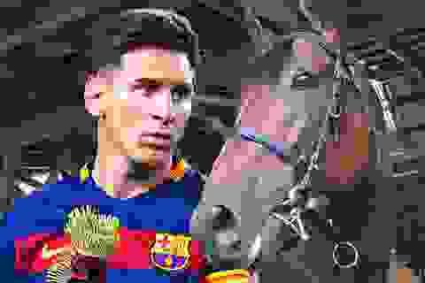 Messi tranh danh hiệu VĐV xuất sắc nhất năm cùng...ngựa
