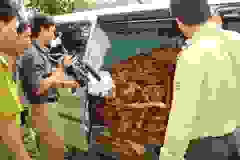 """Vụ gỗ sưa trăm tỷ: Cán bộ kiểm lâm """"móc nối"""" với lâm tặc"""