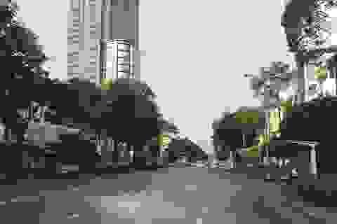 TPHCM: 74 cây xanh có thể bị chặt để xây nhà ga metro