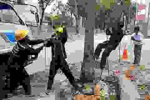 TPHCM quyết định chặt 2 cây cổ thụ để thi công nhà ga metro