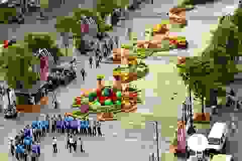 TPHCM: Đường hoa Nguyễn Huệ năm nay sẽ có nhiều hoa đẹp, lạ