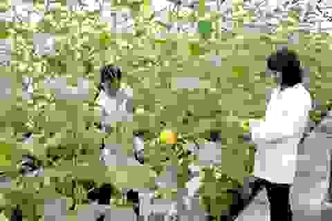 Chi 3 tỷ USD du học mỗi năm, Việt Nam vẫn thiếu kỹ sư lúa gạo, cà phê...