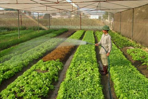 Có nên bỏ công việc 50 triệu đồng/tháng để về quê trồng rau?