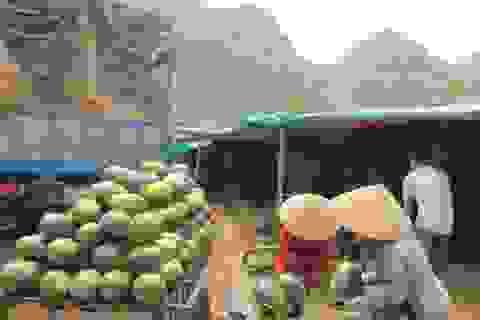 Dưa hấu xuất sang Trung Quốc có giá 5.000 đồng/kg