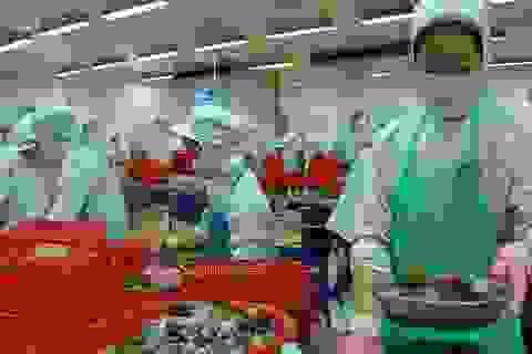Úc sẵn sàng xem xét nhập khẩu tôm tươi nguyên con của Việt Nam