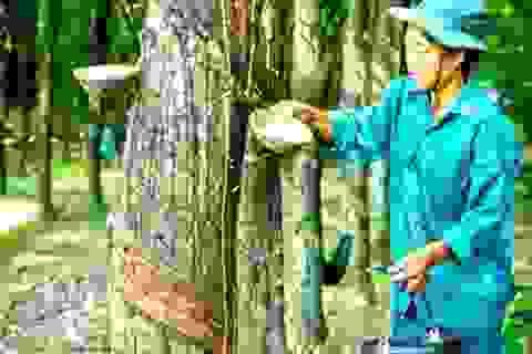 Tập đoàn Cao su Việt Nam trì hoãn thoái vốn để tránh lỗ