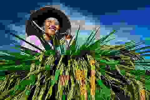 """Bình chọn 63 """"bông hoa đẹp"""" nông dân Việt Nam"""