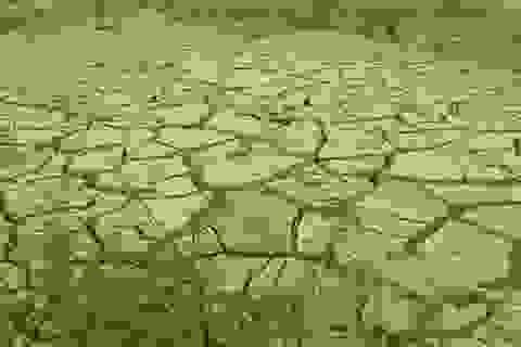 """Chuyển đổi đất lúa: """"Biến"""" khô cằn, sỏi đá thành """"cơm"""""""