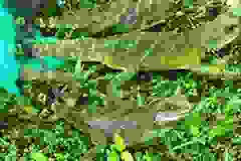 Thả nhiều loại động vật hoang dã về môi trường tự nhiên