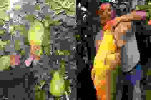 Quả chanh nặng 3kg, cá chép dài 1m