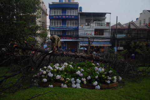 Đà Lạt: Mưa lớn, cây gãy đổ, hàng trăm gia đình mất điện
