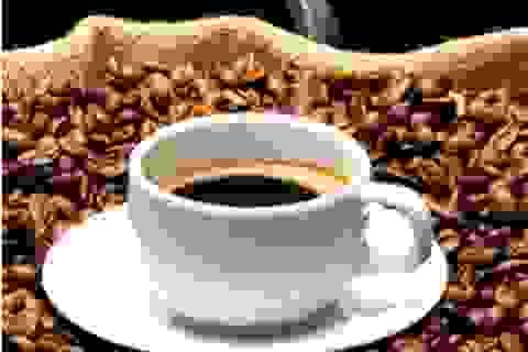 Green Coffee Bean giúp bạn giảm cân nhanh nhờ tinh chất hạt cà phê