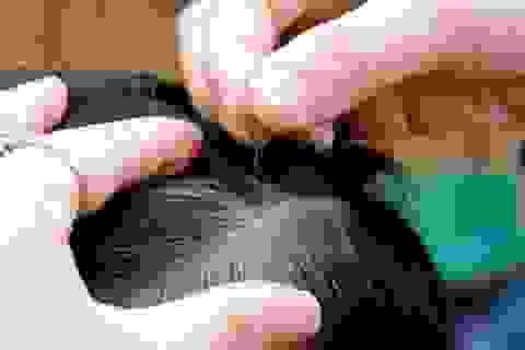 Sai lầm không ngờ khiến tóc bạn nhanh bạc sớm