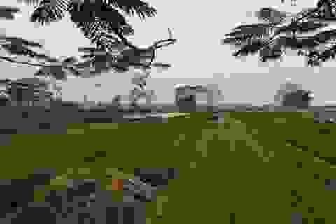 Tư vấn trực tiếp trên đồng ruộng của nông dân