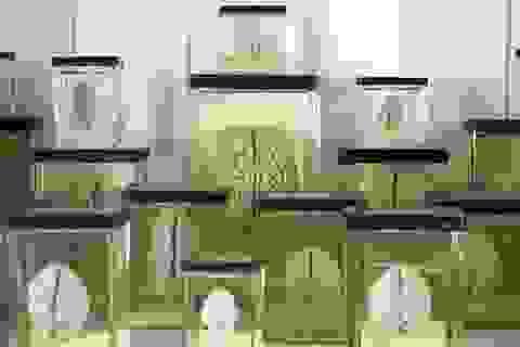100 bộ não mẫu vật của đại học Texas biến mất không rõ lý do