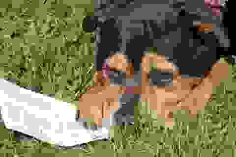 Chó được mời bầu cử Nghị viện châu Âu