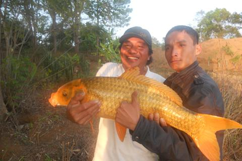 Câu được cá vàng khủng ở Biển Hồ
