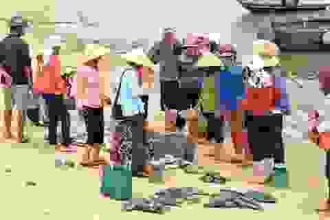Thêm một số khu vực ven biển có hiện tượng cá chết cục bộ