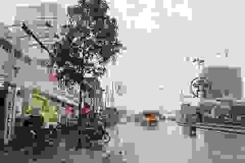 """Hà Nội: Cây mới trồng trên phố Nguyễn Chí Thanh lớn """"như thổi"""" qua 1 đêm"""