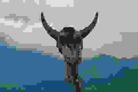 Kỳ bí nghĩa địa sọ trâu giữa lưng chừng trời