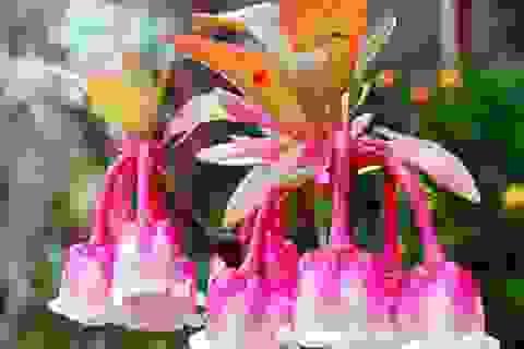 Sắc hoa đào chuông như môi thiếu nữ trên đỉnh Bà Nà