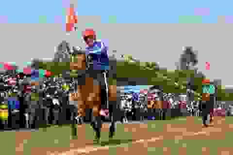 Lóc cóc vó ngựa xứ Nẫu