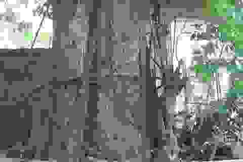 """Hà Nội: Cả làng """"không ngủ"""" bảo vệ cây sưa bạc tỷ"""