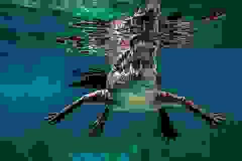 """Nhiếp ảnh gia """"săn"""" ảnh cá mập bất ngờ đụng độ... cá sấu"""