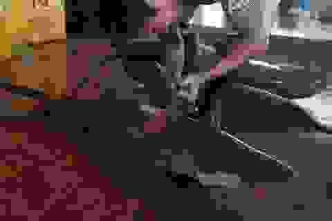 Loạt ảnh cá mập bị cắt vây gây sốc ở Indonesia